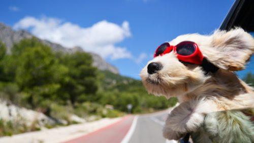 Câini în mașini: cinci moduri în care să-i plimbi corect cu automobilul