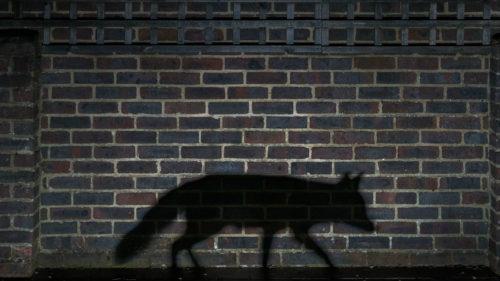 Cum ajung animalele să devină nocturne ca să fugă de noi