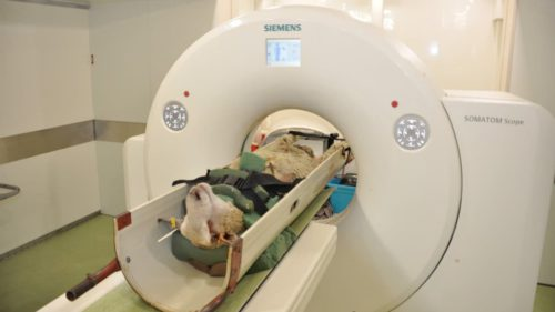 De ce au început fermierii să-și scaneze oile la tomograf