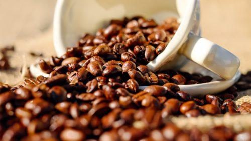 Culturile de cafea, afectate de-o ciupercă extrem de periculoasă