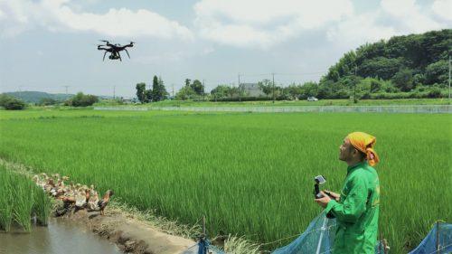 Cum ar putea schimba dronele industria orezului