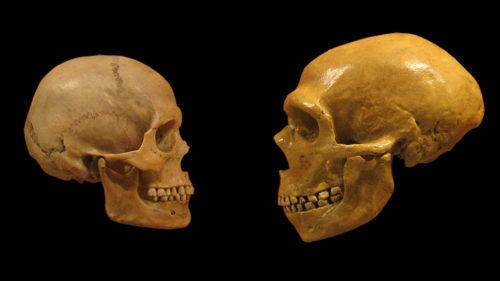 Cum am ajuns să fim ultima specie de oameni existentă pe Pământ