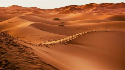 Cum ar putea deșertul Sahara să devină un fel de oază