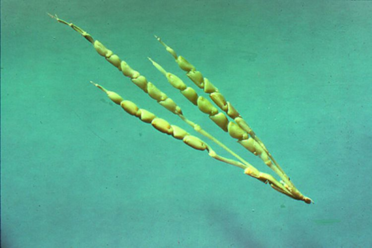 fructe si legume modificate genetic