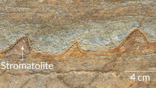 Cea mai veche fosilă din lume ar putea fi doar o rocă banală
