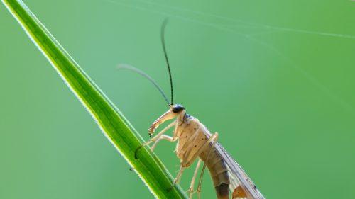 De ce dispar insectele din toată lumea