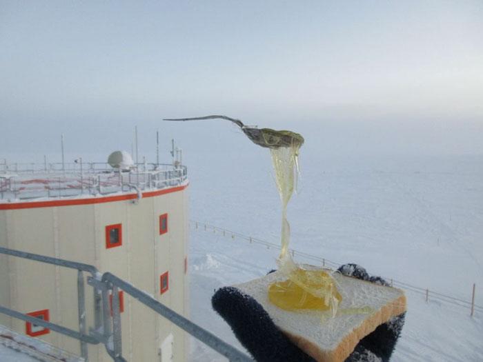 mancare in antarctica