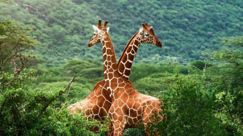 Raport devastator despre planetă: câte animale au dispărut în ultimii 40 de ani