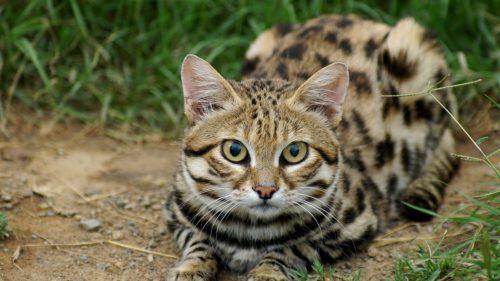 Cea mai letală pisică din lume e și cea mai adorabilă