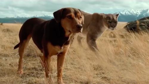 PLAYFILM A Dog's Way Home – De ce o să iubești câinii chiar mai mult