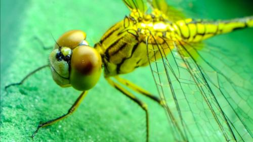 De ce vor cercetătorii să creeze roboți cu creier de insectă