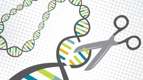 Noul experiment cu bebeluși modificați genetic – de data asta mai etic