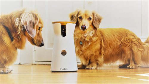 Tehnologia care-ți hrănește câinele când ești plecat de acasă