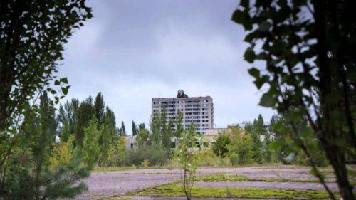 De ce plantele de la Cernobîl sunt imune în fața cancerului