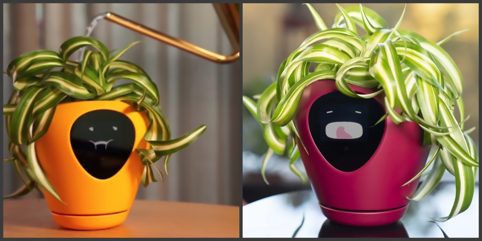 2 tamagotchi lua-smart-planter-facial-express