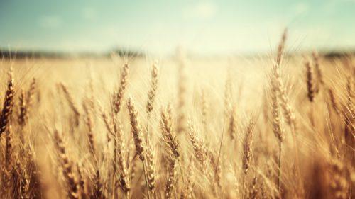 Mâncare din aer: dioxidul de carbon ar putea fi transformat în aliment și nu are gust rău