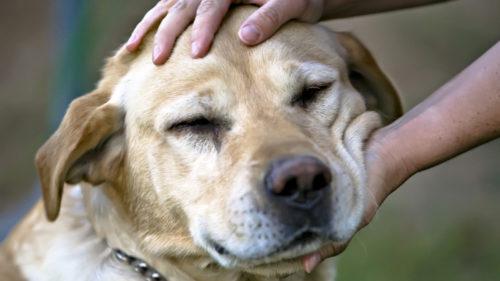 Animalele de casă, tratamente antistres: la ce concluzie au ajuns cercetătorii