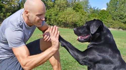 Cercetătorii au descoperit de ce sunt câinii atât de prietenoși