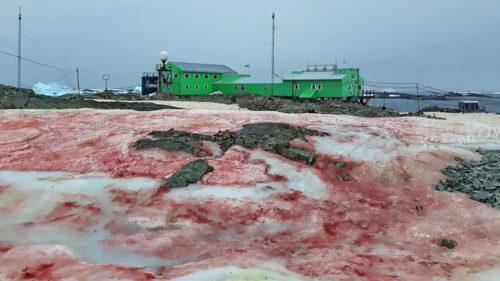 Scene apocaliptice în Antarctica: zăpada roșie este un semn mai îngrijorător decât pare