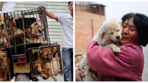 Viața câinilor din China nu va mai fi la fel: ce spune o nouă lege adoptată la Beijing