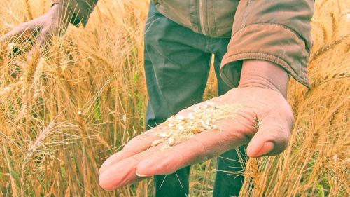 Dezastru pentru România: seceta de acum îi face pe agricultori să se teamă că va fi ca cea din 1947