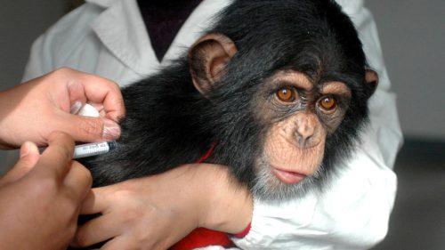 Victimele colaterale ale vaccinului: animalele de test, pe cale de dispariție