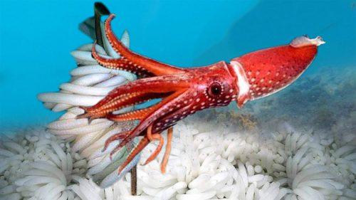 Calamarul ar putea fi folosit pentru revoluționarea medicinei și totul începe de la acest proces