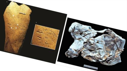 Această unealtă din os a fost folosită de oameni în urmă cu aproape 500.000 de ani