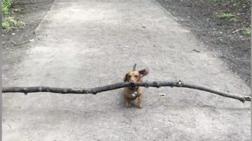 Câinele care îți dă o lecție de distanțare socială: de ce face acest efort teribil