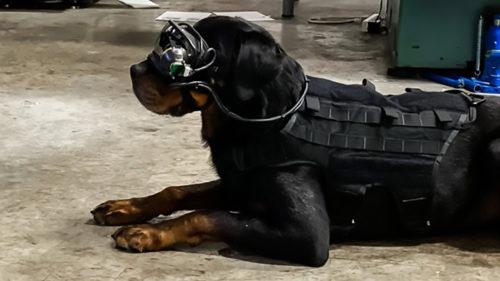 Câinii controlați prin realitate augmentată, cea mai nouă victimă a armatei americane