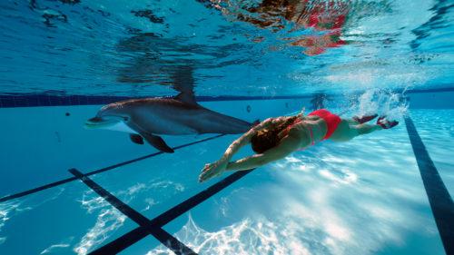 Cum ar putea fi delfinii înlocuiți cu niște roboți și probabil că nici nu ți-ai da seama