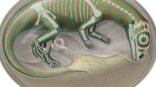 Au reconstruit cranii din embrioni de dinozauri vechi de 200 de milioane de ani în detalii 3D uimitoare