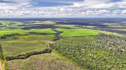 Cea mai ingenioasă metodă de-a salva pădurile va fi aplicată în această regiune