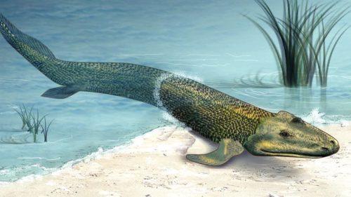 Speciile acestea extrem de rare au fost găsite când se credea că au dispărut definitiv