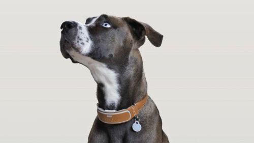 Cea mai tare invenție ca să nu mai rătăcești lucruri: cum funcționează pentru animale de companie?