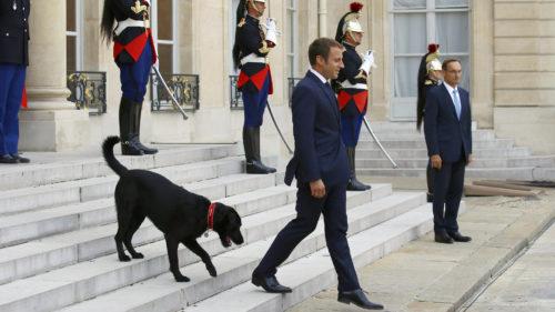 """Câinele lui Macron, viral pe internet: """"mesajul"""" patrupedului care l-a transformat în vedetă"""