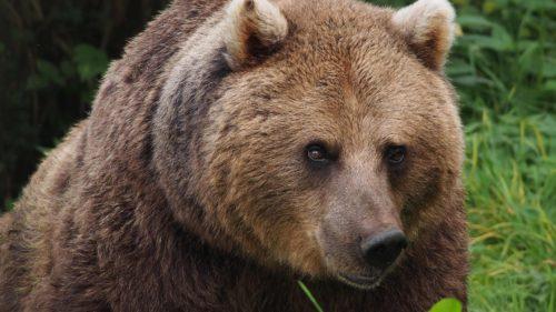 Răzbunarea românilor: ce a apărut pe Google Maps după împușcarea ursului Arthur