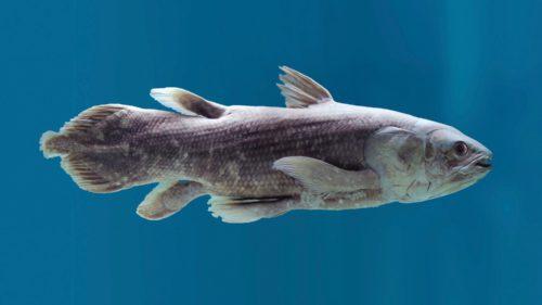 Cel mai bătrân pește trăiește până la un secol: unde îl găsești și cum se înmulțește