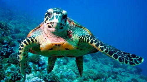 Modalitatea inedită a acestei țări pentru a salva viața marină