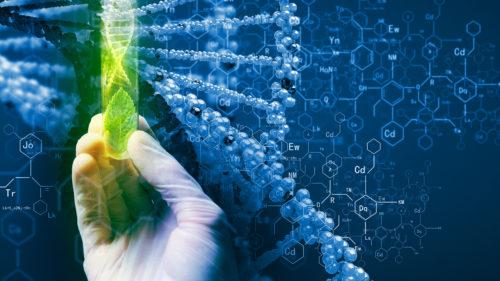 Biotehnologia întâlnește o piedică: ce se întâmplă cu modificare genetică
