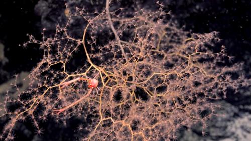 Viața sălbatică din oceane: creaturile magnifice descoperite de către cercetători în adâncuri