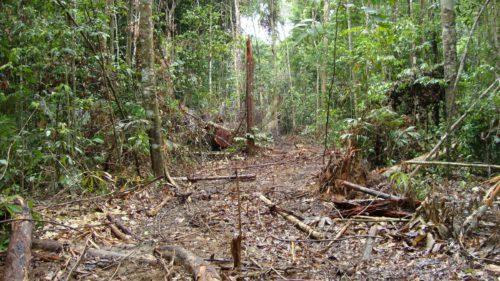 Pădurea tropicală dispare. De ce se întâmplă asta și cum ne afectează pe toți