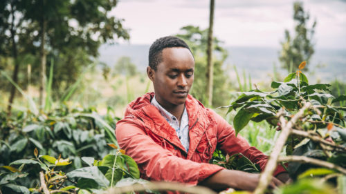 Soluția care ajută în criza schimbărilor climatice: ce plantează fermierii