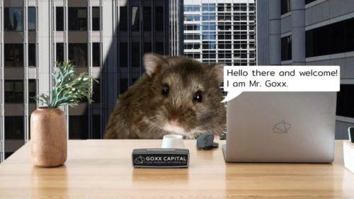 """Un hamster din Germania redefinește conceptul de """"haihui pe Wall Street"""": de ce e mai bun decât un investitor profesionist"""