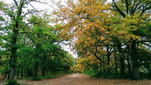 O pădure de stejari, transformată în laborator de cercetare: concluzia fascinantă a oamenilor de știință